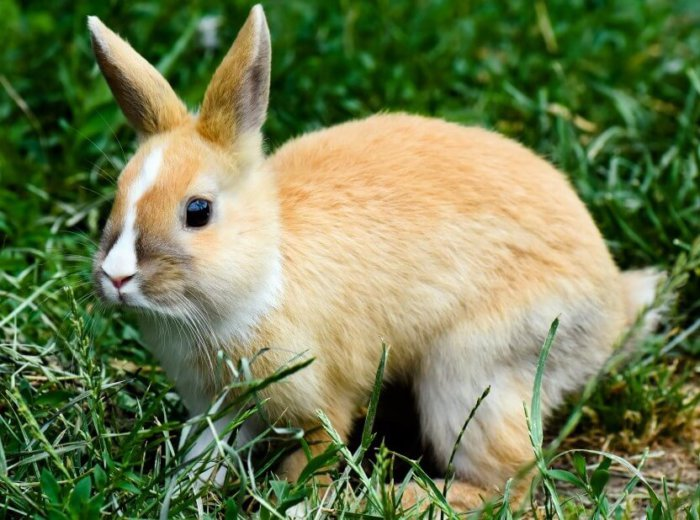 Больной кролик