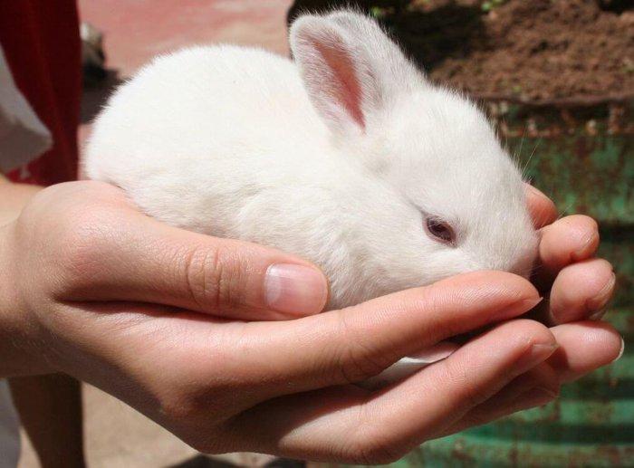 Правильный способ брать кролика на руки