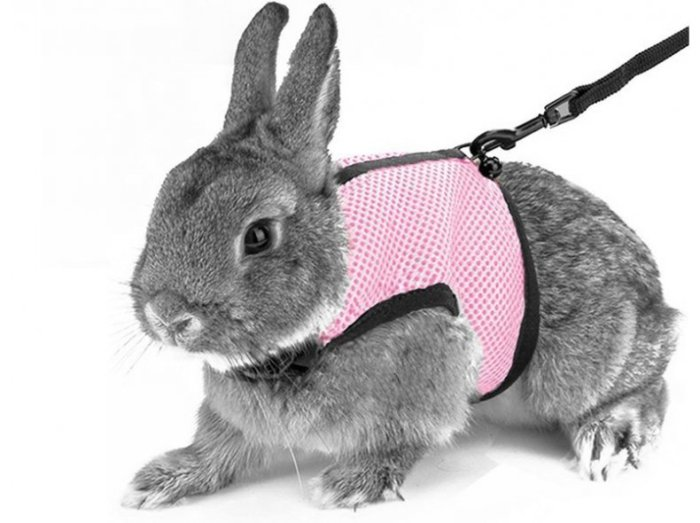 как одевать поводок кролику