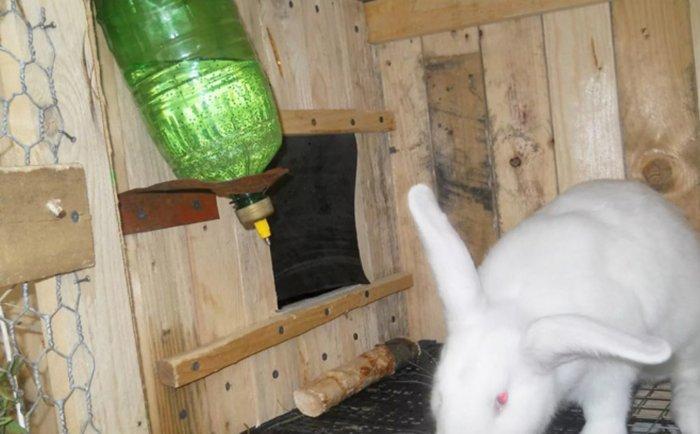 Поилка из пластиковой бутылки для кролика