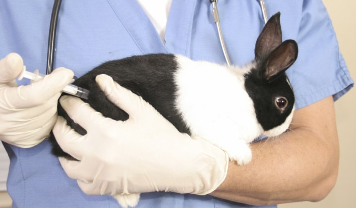 Прививка кролику