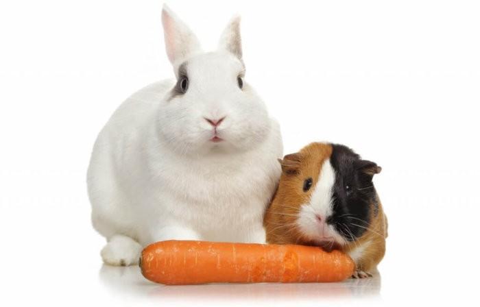 Морковь для домашних питомцев