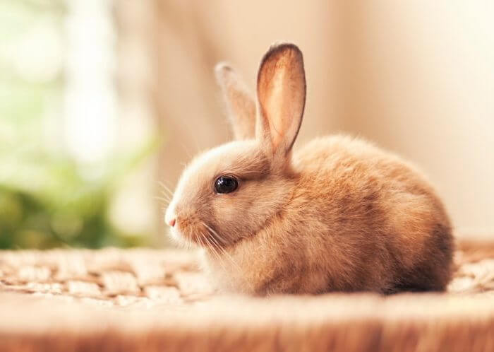 Больной кролик становится беспокойным