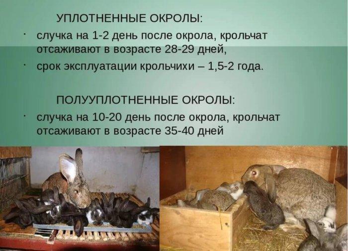Методики разведения кроликов