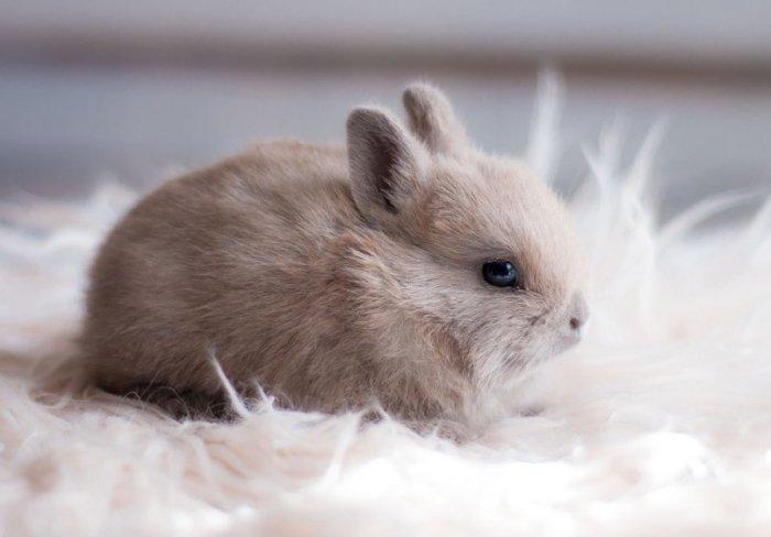 Кролик после вакцинации