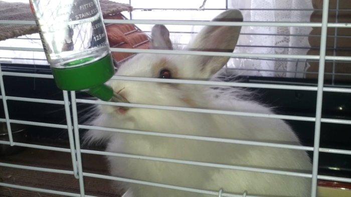 Кролик пьет лекарства