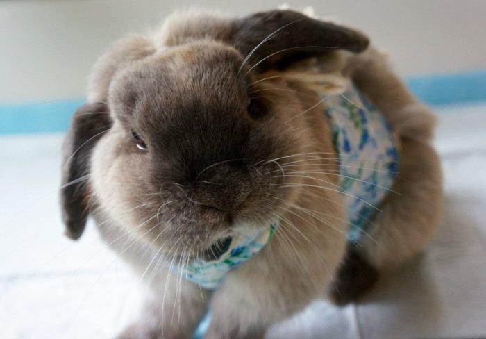 Кастрированный кролик не будет плохо пахнуть