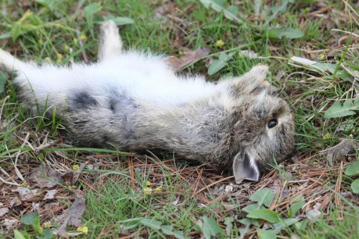Кролик погиб от эймериоза