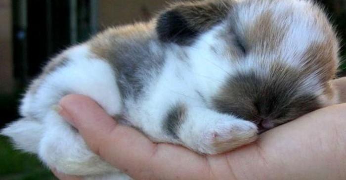 Спящий кролик