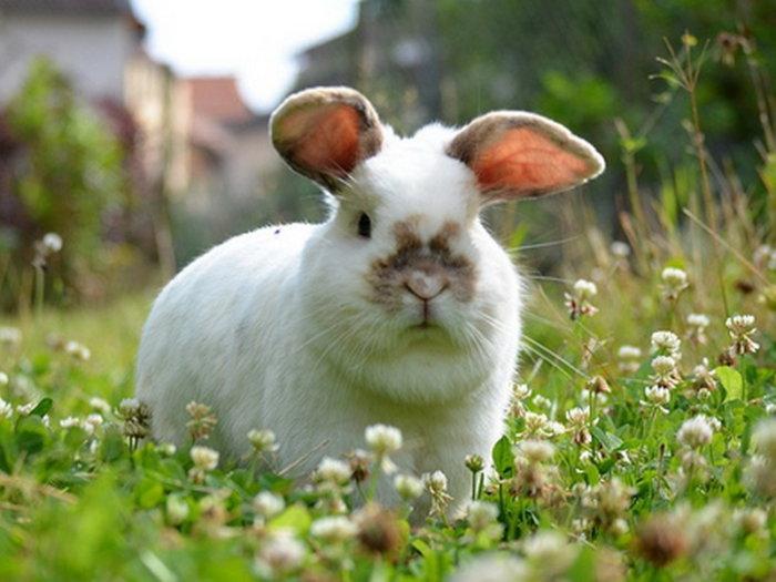 Кролик ест люцерну