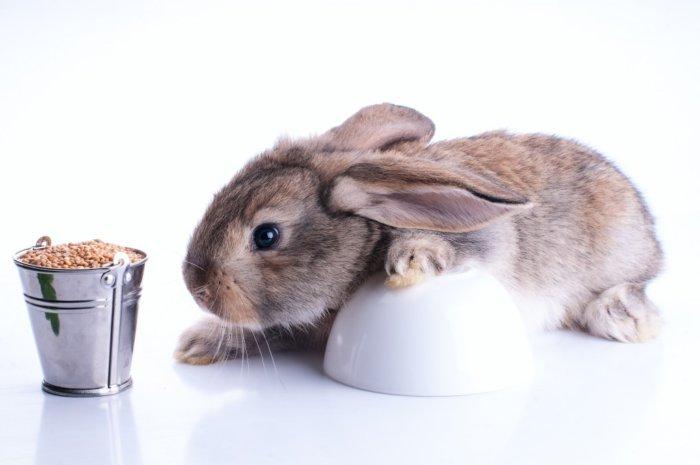 Злаки для кролика