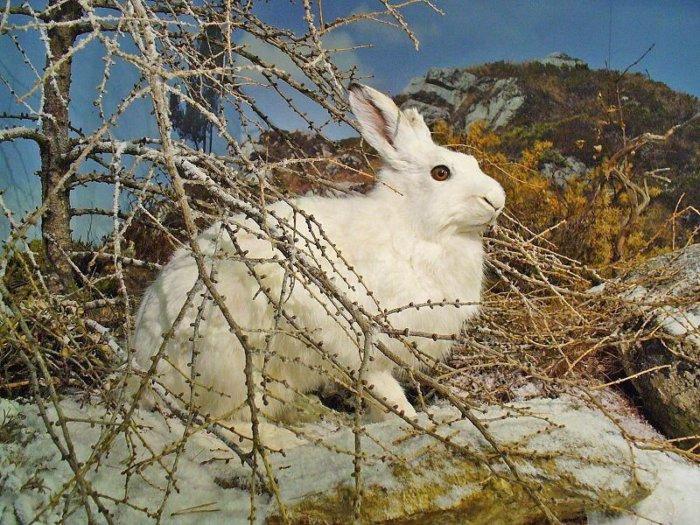Охота на дикого кролика