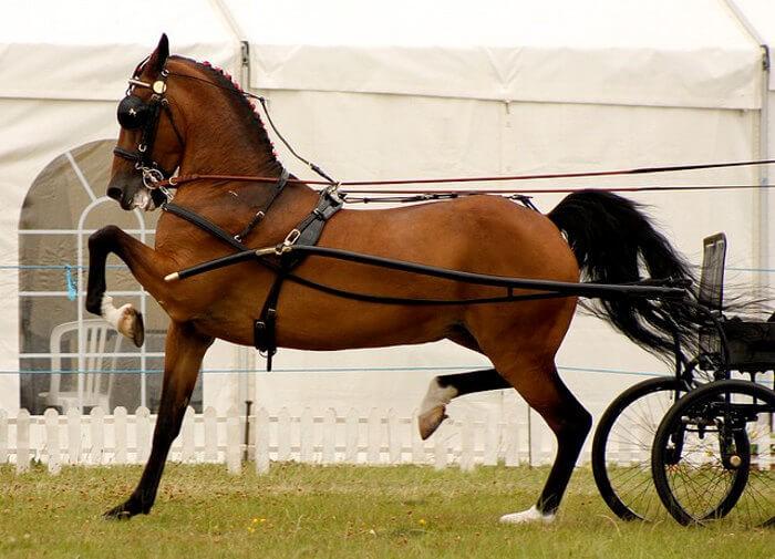 Лошадь Хакнэ