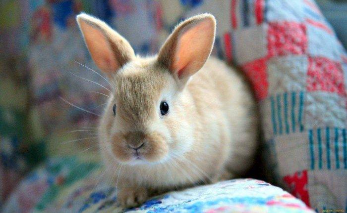 Приручить можно только кролика