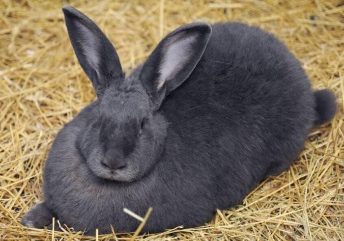 Крольчиха угнетена и отказывается от пищи