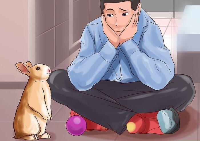Кролику необходимо приобрести игрушки