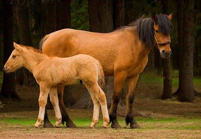 Вятские кони