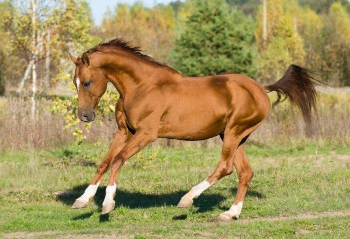 Донская порода лошадей