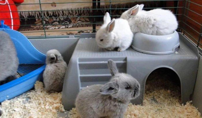 Обустройство жилища декоративных кроликов