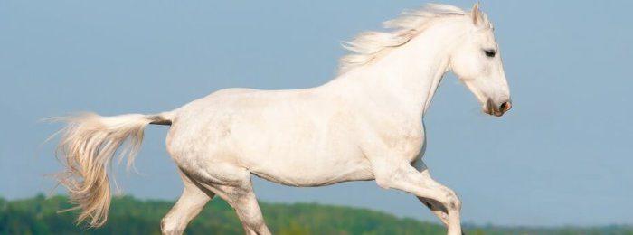 Лошадь орловской породы