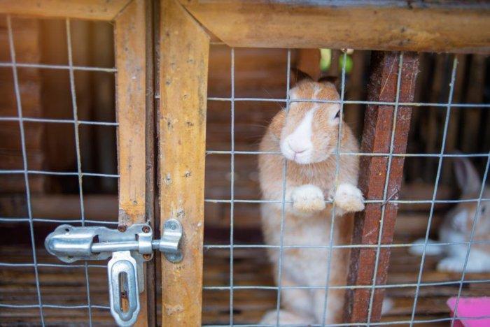 Кроличьи клетки для откорма