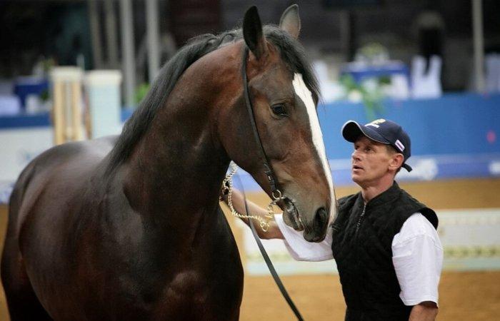 Владимирская лошадь