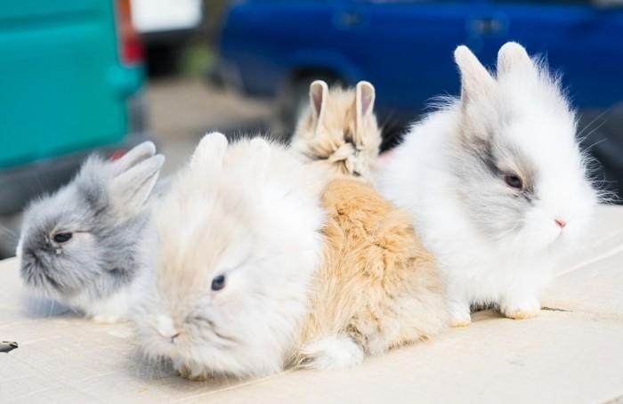 Кролики на выставке