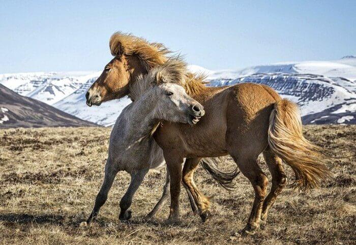 Жизнь диких лошадей