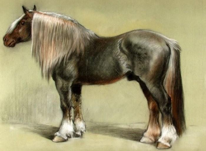 Лошадь породы Битюг