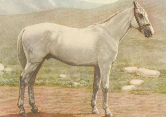 Иомудская лошадь