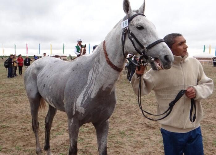 Внешность иомудской лошади