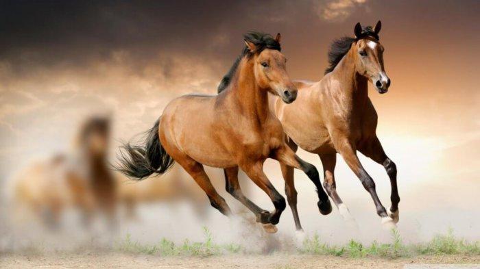 Карабахские лошади