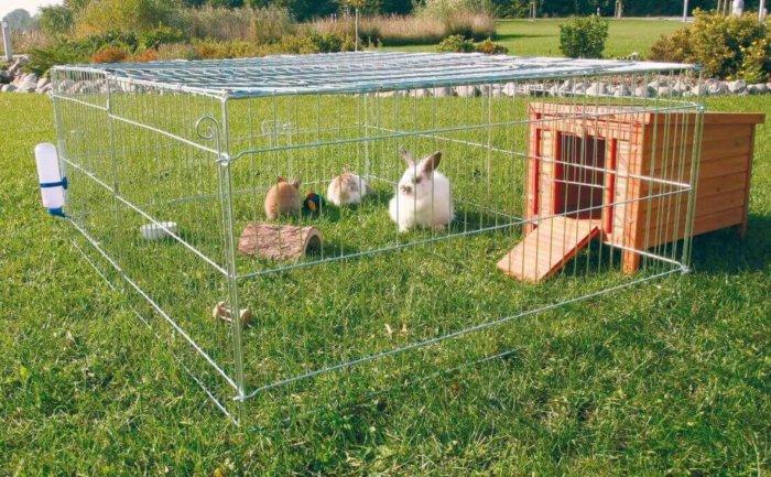 Выгул кроликов
