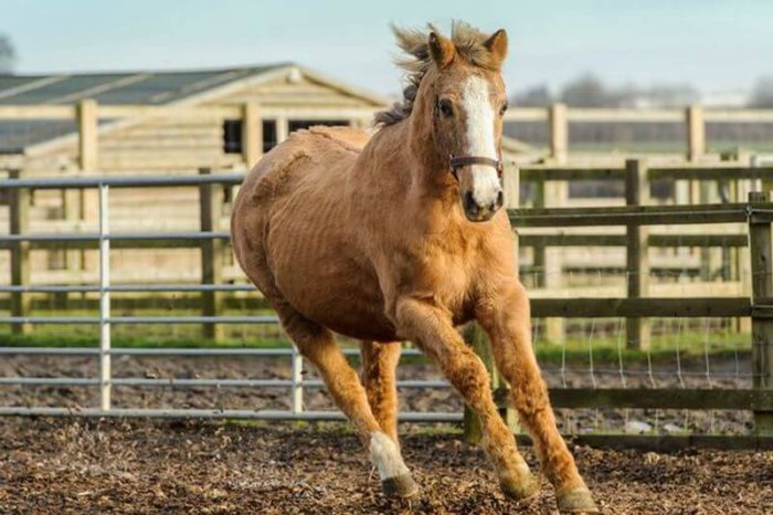 Старая лошадь