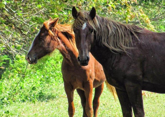 Домашние лошади