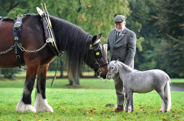 Выбор имени для лошади
