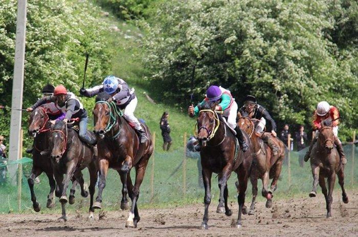Абазинские лошади