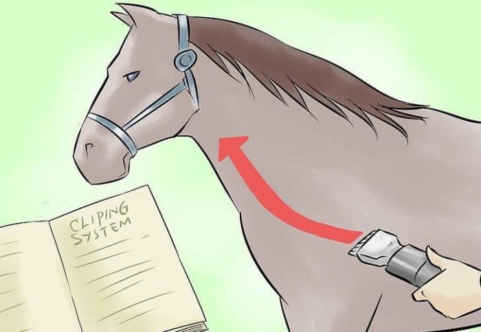 Как стричь лошадь