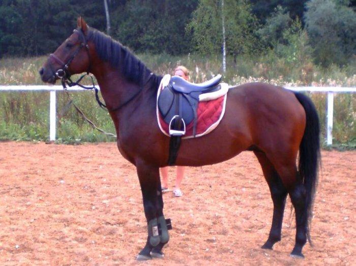 Вишневый окрас гнедых лошадей