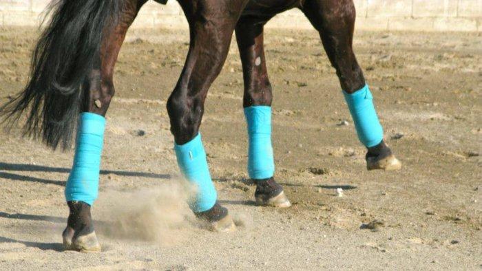 Бинты для лошадей