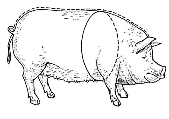 Замер веса свиньи