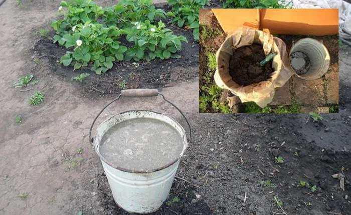 Подкормка капусты брокколи