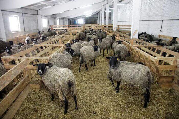 Кормушки в овчарне
