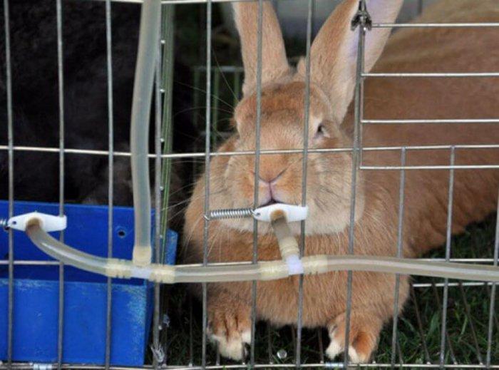 Поилка в крольчатнике