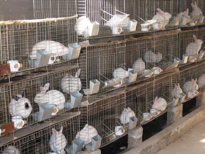 Крольчатник из сетки