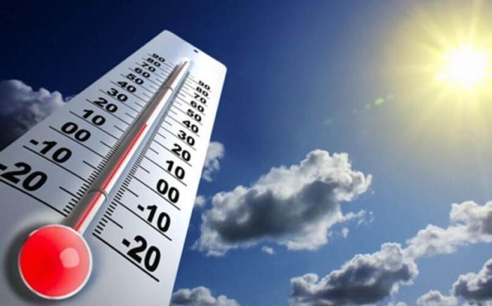 Идеальная температура для выращивания рассады