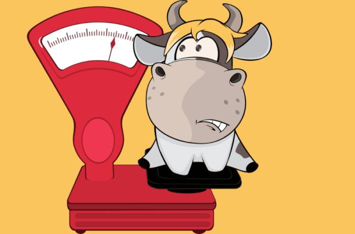 Измерение веса КРС