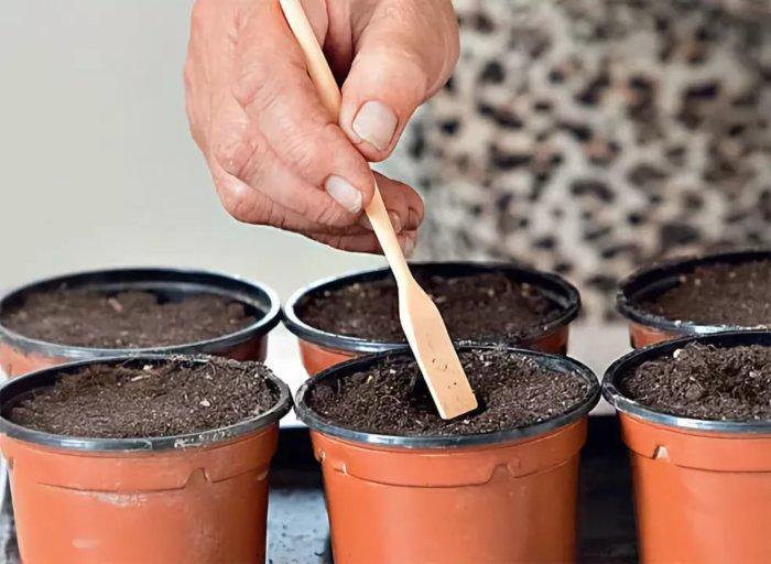 Удобрение почвы с семенами капусты