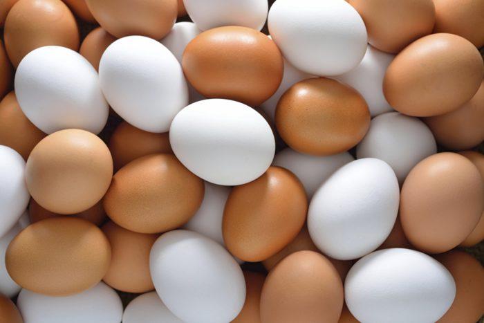 Наибольшее количество яиц несут куры пород яичного направления