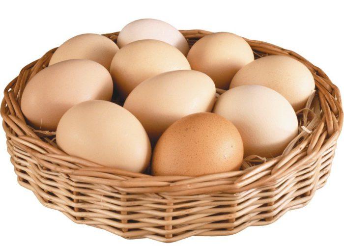 Курчавая несушка даёт около 120–140 яиц ежегодно
